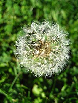 Make a Wish by Sheryl Burns