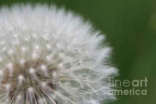 Make a Wish by Stacey Zimmerman