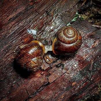 Make it slow. Copse snail by Jouko Lehto
