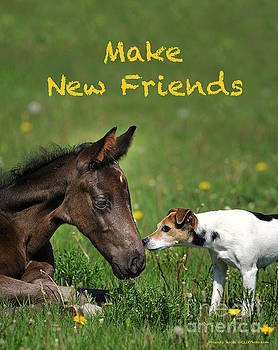 Make New Friends by Shawn Hamilton