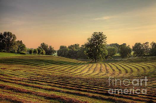 Larry Braun - Making Hay