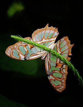 Malachite puts on a show by Ruth Jolly