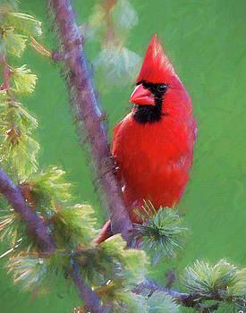 Male Cardinal by Jerry Deutsch