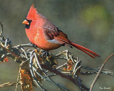 Male Cardinal by Ken Everett