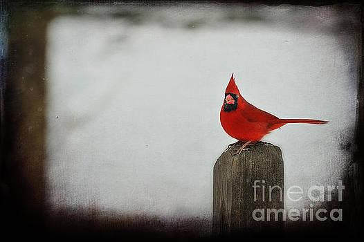 Dan Friend - Male cardinal on post