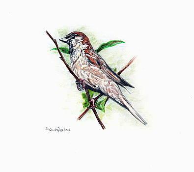 Male House Sparrow by Heidi Kunkel