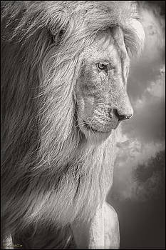 LeeAnn McLaneGoetz McLaneGoetzStudioLLCcom - Male Lion Black and White