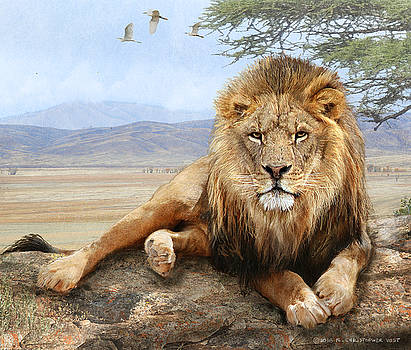 Male Lion Reclining by R christopher Vest