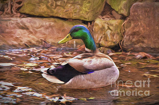 Male Mallard Art by Kerri Farley