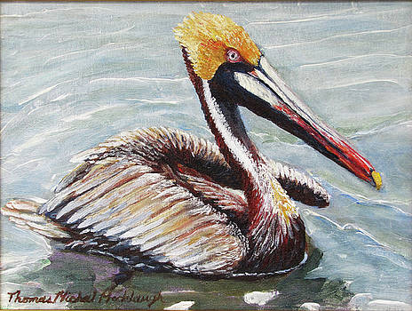 Male Pelican in Water by Thomas Michael Meddaugh