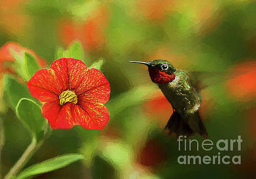 Male Ruby and a Petunia Bloom by Darren Fisher