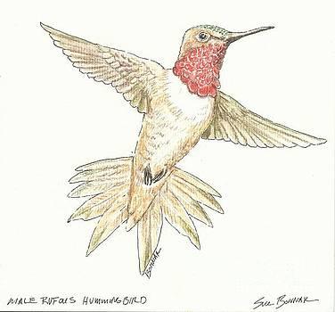 Male Rufous Hummingbird by Sue Bonnar