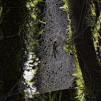 Male Spider - Won't Ask for Directions by Phil Dyer