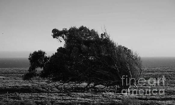 Clayton Bruster - Malformed Treeline