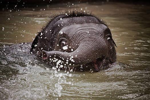 Mali by Animus Photography
