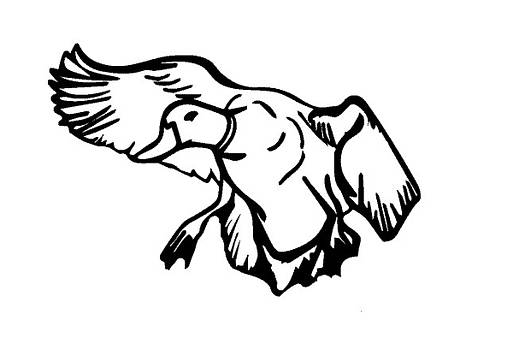 Mallard Duck Graphic by Joann Renner