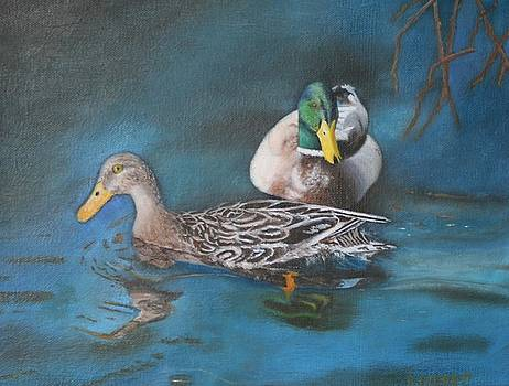 Mallard Ducks by Brenda Everett