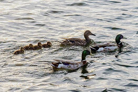 Mallard Family by Brian Wallace