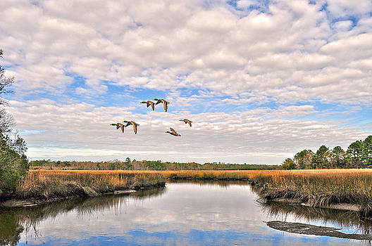 Mallards In Flight by Donnie Smith
