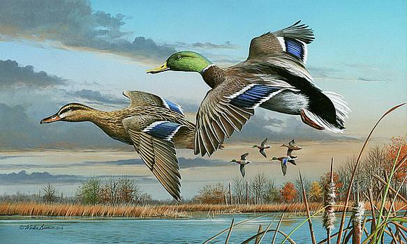 Mallards in Flight by Mike Brown