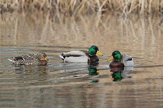 Mallards on the Pond by Linda Crockett