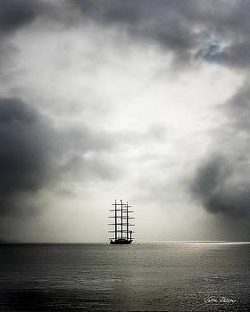 Maltese Falcon by Sabine Stetson
