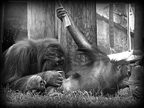 Emily Kelley - Mama and Baby Orangutang