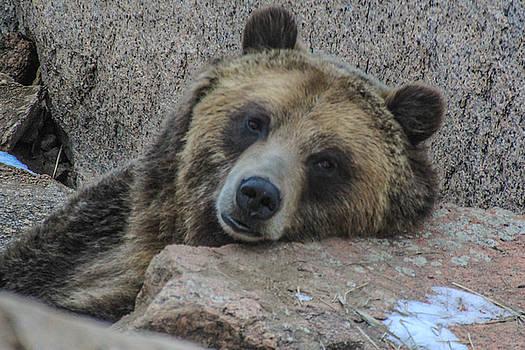 Mama Bear by Angela Moreau