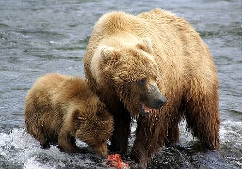 Patricia Twardzik - Mama Grizzly Bear and Cub at the Falls