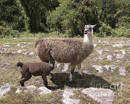 Mama Llama and Baby by Catherine Sherman