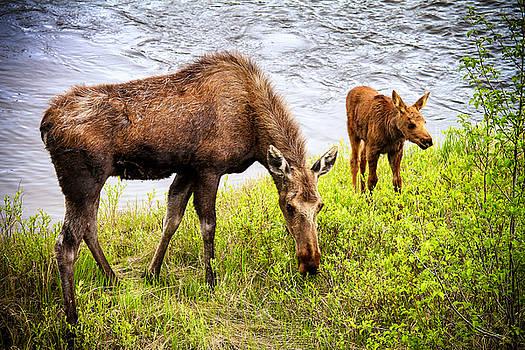 Mama Moose and Her Baby by Juli Ellen