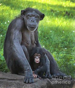 Gary Gingrich Galleries - Mama N Baby Chimp-0490