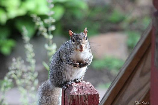 Mama Squirrel by Trina Ansel