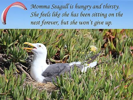 Gary Canant - Mamma Seagull on nest
