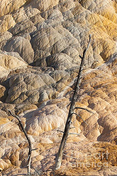 Mammoth Hot Springs Travertine Trees by DS Dodd