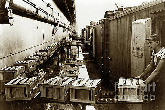 Man putting box's of Celery into rrefrigerated railroad boxcar. by California Views Mr Pat Hathaway Archives