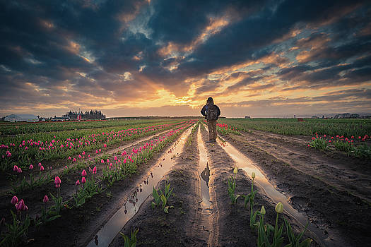 Man Watching Sunrise In Tulip Field by William Lee