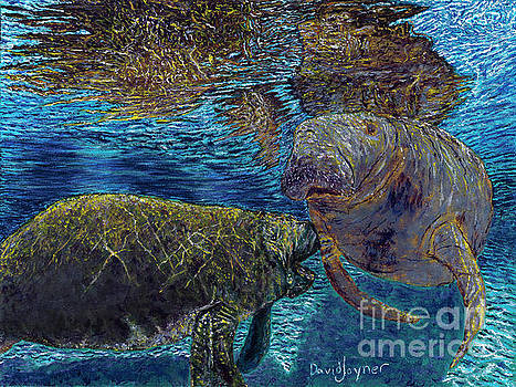 Manatee Motherhood by David Joyner