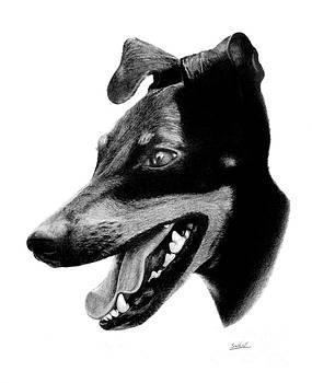 Manchester Terrier by Stuart Attwell
