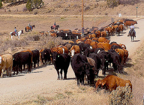 Mancos Valley cattle drive by FeVa  Fotos