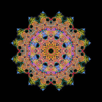 Mandala #3 by Georgette Grossman