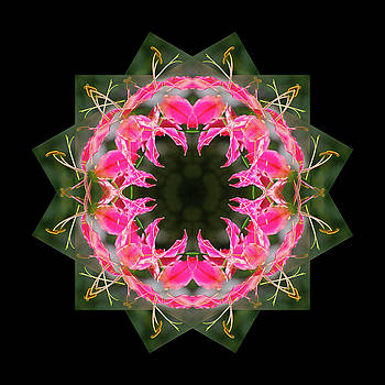 Mandala #5 by Georgette Grossman