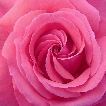 Mandala of Rose by Jacqueline Migell