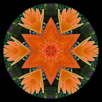 Mandala Star by Stephanie Maatta Smith