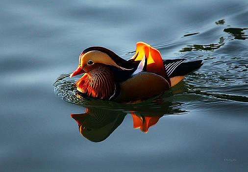 Mandarin Duck by Xueling Zou