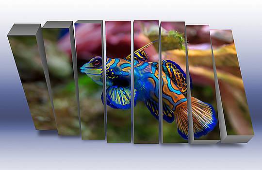 Mandarin Saltwater Fish  by Marvin Blaine