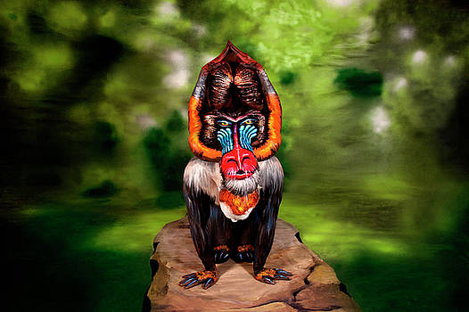 Mandrill Bodypainting Illusion by Johannes Stoetter