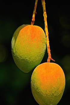 Mango by Gillis Cone