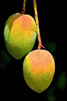 Mangos by Gillis Cone