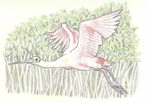 Mangrove Flyer - pencil without water by Sue Bonnar